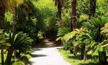 Экскурсия в Сухумский ботанический сад из Гранд Отель Гагра - Достопримечательности Республика Абхазия